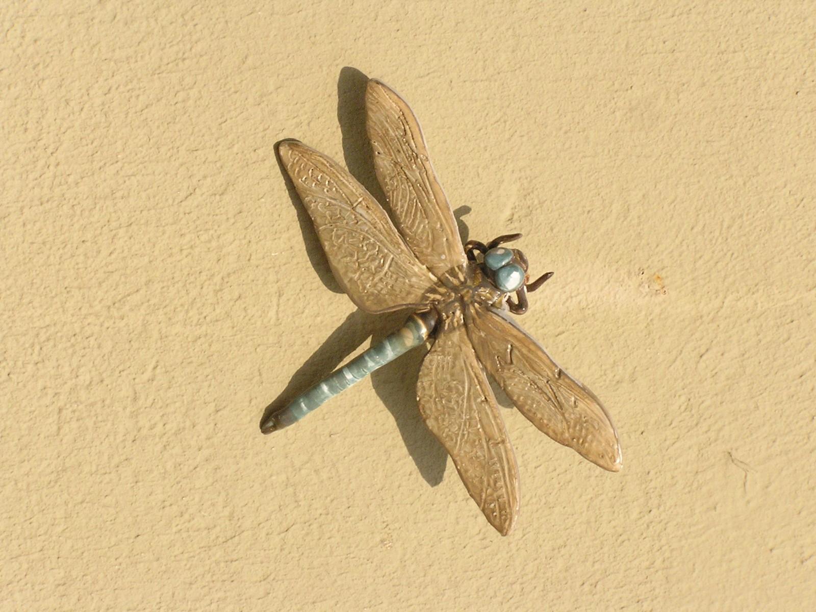 insetti1 grandezza naturale
